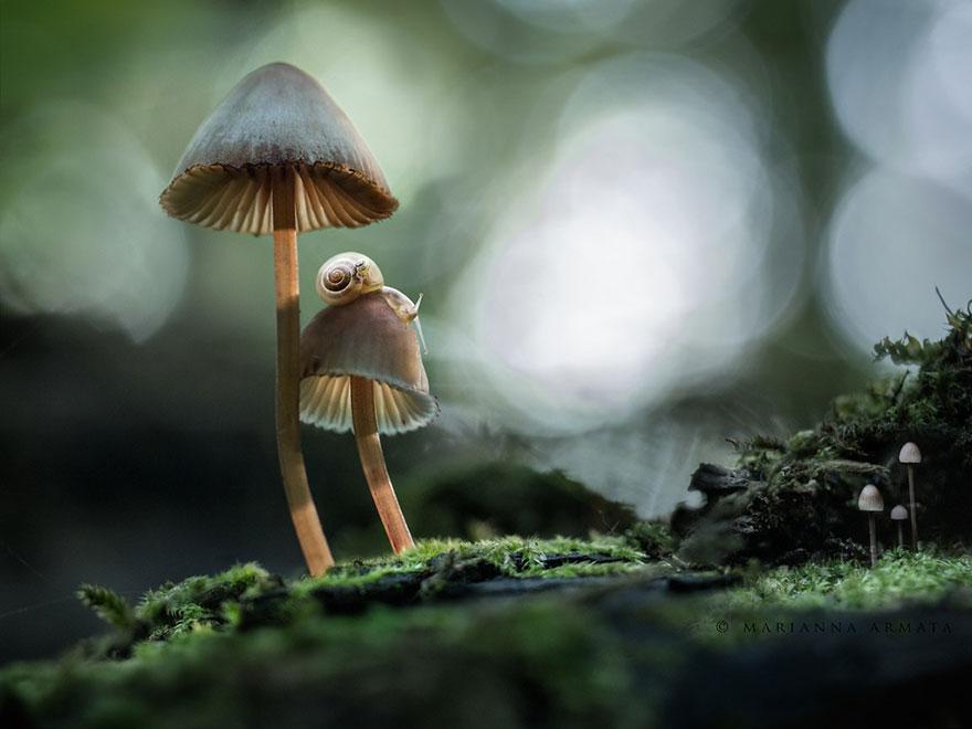 benefici dei funghi tibetani per la perdita di peso