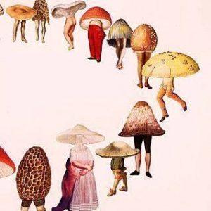 Micoterapia e funghi medicinali