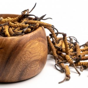 Cordyceps fungo medicinale